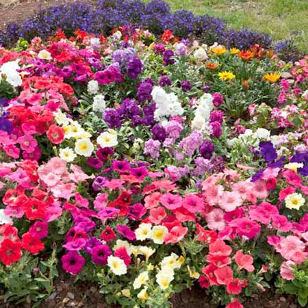 Nursery Plants: Flower Plants: Wonderfull and Exciting
