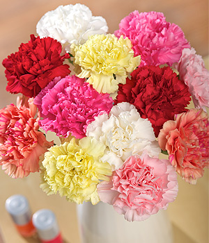 Bunches.co.uk 12 Classic Carnations FC12
