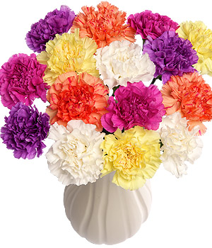Bunches.co.uk 15 Funky Carnations FUNK15