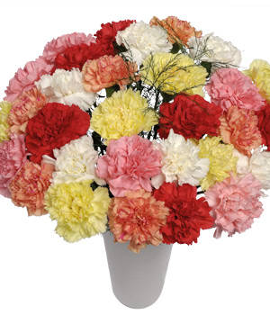 Bunches.co.uk 30 Classic Carnations