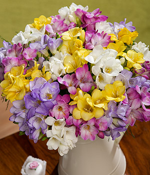 Bunches.co.uk 30 Fragrant Freesias FF30