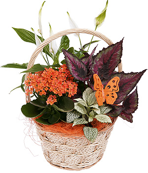 Bunches.co.uk Autumn Flower Basket PAMB
