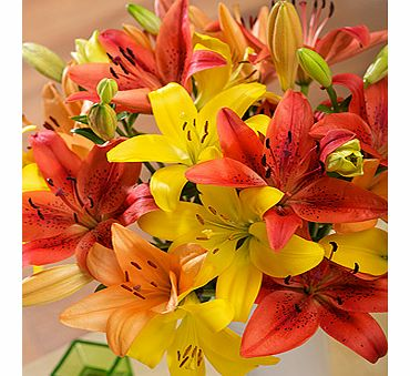 Bunches.co.uk Autumn Luxury Lilies FMLXA