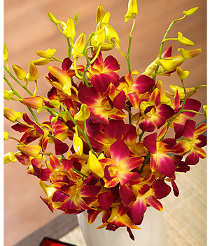 Bunches.co.uk Autumn Oriental Orchids FREDO