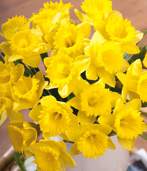 Bunches.co.uk Delightful Daffodils FDAFF