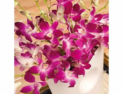 Bunches.co.uk Oriental Orchids Large FOOL