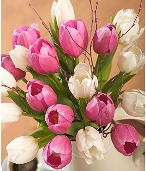 Bunches.co.uk Pink and White Tulips FMDTUL