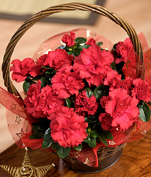 Bunches.co.uk Red Azalea Basket XAZAB