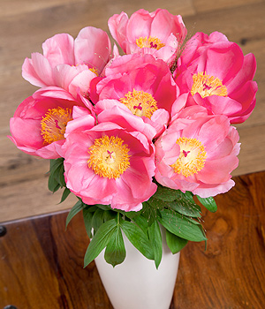 Bunches.co.uk Summer Peonies FPEON