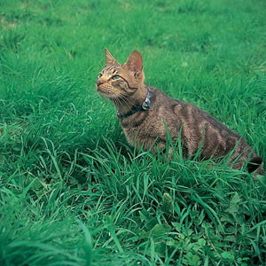 how to stop cats pooping on grass