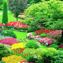 Trip to Victoria and Butchart Garden plus - CLICK FOR MORE INFORMATION