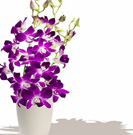 Eden4flowers BRUNEI DENDROBIUM ORCHIDS BOUQUET - Birthday Flowers Thank You and Anniversary Bouquets by Eden4flowers