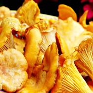 European Girolles (fresh)