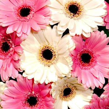 Fresh Flower Delivery on Price Alert Link To This Page More Pink Flowers And Flower Delivery