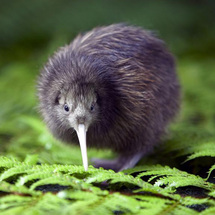 ... Springs and Kiwi Encounter - Adult - CLICK FOR MORE INFORMATION