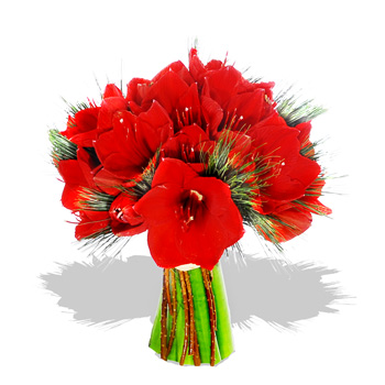 Red amaryllis bouquet flowers review compare prices for Bouquet amaryllis