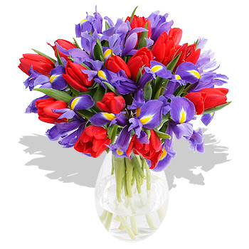 Tulips and Iris - flowers