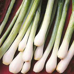 Vegetables cheap prices , reviews, compare prices , uk delivery