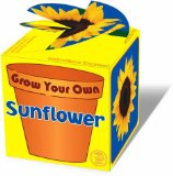 Grow Your Own Sunflower - CLICK FOR MORE INFORMATION
