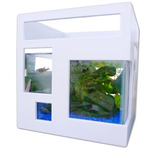 Fishtank for Umbra fish hotel