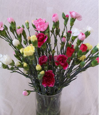 A classic bouquet of 15 Spray Carnations - ideal for any occasion and VERY long lasting! Chocolates
