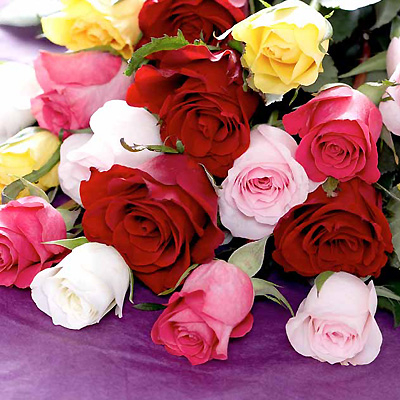 This classic selection of fresh short-stemmed Roses in mixed shades makes a perfect gift to show som
