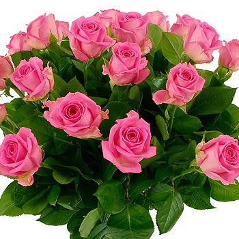 flowers roses. 20 Pink Roses - flowers