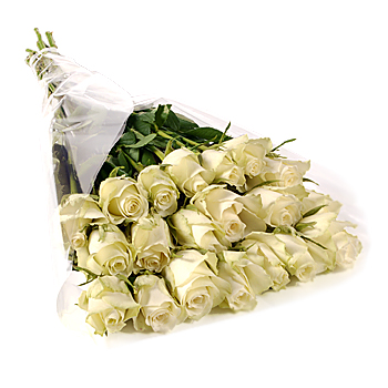 beautiful white rose flowers. Stem White Roses Gift Wrap