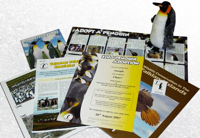 Volunteer Point is currently home to approximately 1,200 adult King penguins and 345 chicks and is o