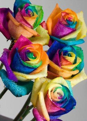 A Dozen Happy Roses - the exclusive multi-coloured rose that is taking Europe by storm! Available ex
