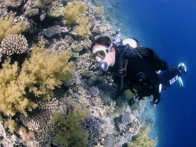 Family scuba diving holidays in the Red Sea product image