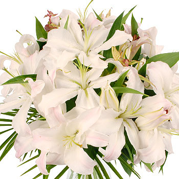 flowers pictures lilies. White Lilies - flowers
