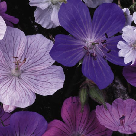 alert link to this page more unbranded flowers and plants