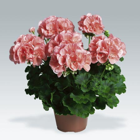 Plant Collection Pack of 10 Pot - review, compare prices, buy online