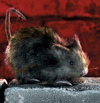 Unbranded Gruesome Horror - Small Creeping Hairy Rat