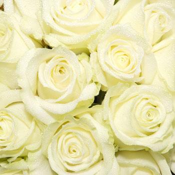 white rose flowers. Unbranded Mass of White Roses