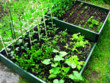 Raised Vegetable Bed (2sqm) product image