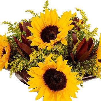 Unbranded Sunflower Safari - flowers