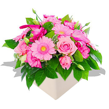 Unbranded Tickled Pinks - flowers
