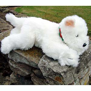 Highland Terrier - CLICK FOR MORE INFORMATION