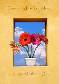 2 99blue sky flowers